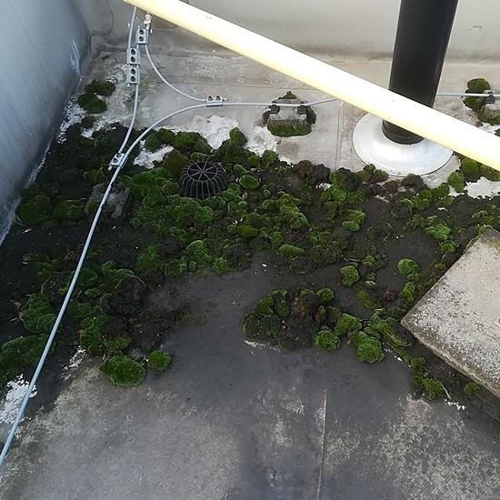 Machy a špina na streche budovy | pemtrade.sk